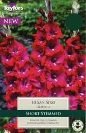 Gladioli San Siro