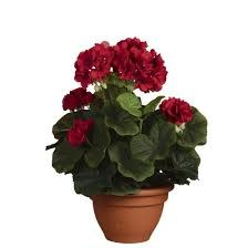Geranium Red in Pot Campana Terra