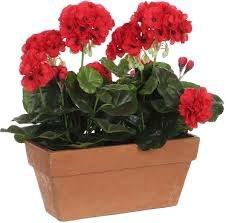 Geranium Red Balcony Tray Terra