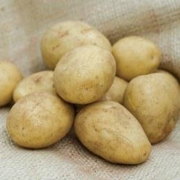 Golden Wonder Seed Potatoes 2kg - Main Crop