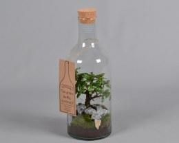 Bonsai in a Bottle 15cm