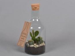 Cactus in a Bottle 15cm