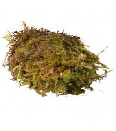Habistat Sphagnum Moss 1kg