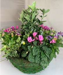 """Hanging Basket Moss with Autumn Colour 14"""""""