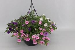 Hanging basket mix