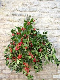 Pre-Order Fresh Holly Bunch with Red Berries
