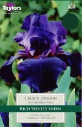 Iris Black Dragon
