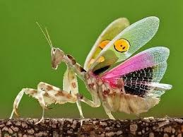 Prayig Mantis Jewelled Flower