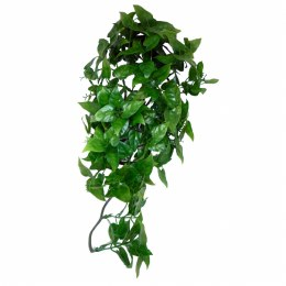 Komodo Philodendron Plant Large