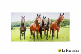 La Hacienda Garden Canvas Inquisitive Horses 56x119cm