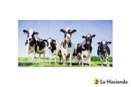la Hacienda Garden Canvas Inquisitive Cows 59x119cm