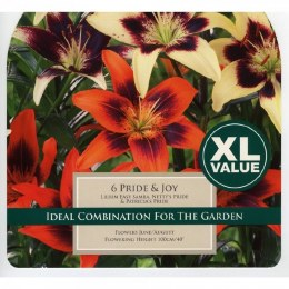 Lily Pride and Joy - Oriental Lily Mix