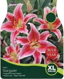 Lilium Stargazer x5