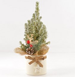Pot Grown Miniature Christmas Tree 35cm Tall in 9cm Ceramic Pot With Pick