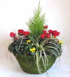 Moss Hanging Basket 16cm