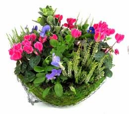 Moss Hanging Basket 16cm with Seasonal Colour