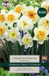 Daffodil - Narcissus 'Mixed Butterflies'
