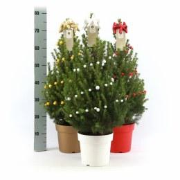 Pot Grown Miniature Christmas Tree 70cm Tall with Garlands in Zinc Pot