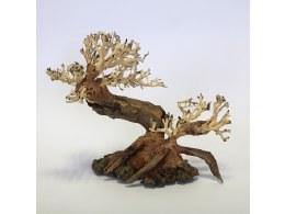 Aquarium Ornament Ancient Pine Bonsai Small