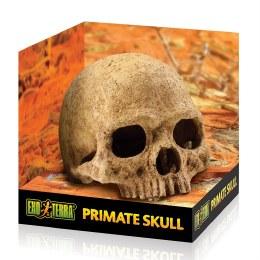Exo Terra Primate Skull  Medium