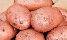 Sarpo Mira Seed Potatoes 2kg - Late Main Crop
