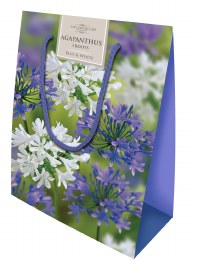 Agapanthus Gift Bag Mix x12