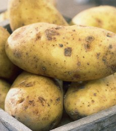 Sharpe's Express Seed Potatoes 2kg  - First Early