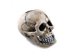 Aquarium Ornament Classic Spooky Skull