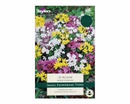 Allium Mixed Colours