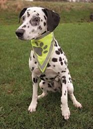 Trixie Safer Lift Dog Nekerchief L-XL