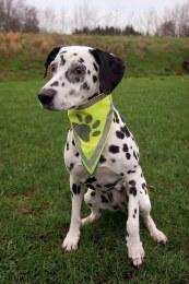 Trixie Safer Lift Dog Nekerchief S-M
