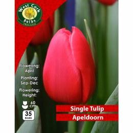 Tulip 'Single Apeldoorn' 35 Pack