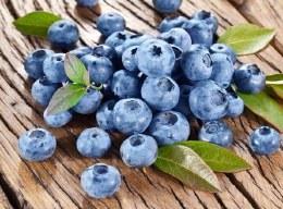 Bluberry 'Bluecrop' | Vaccinium corymbosum 'Bluecrop'