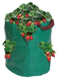 Strawberry/Herb Bag