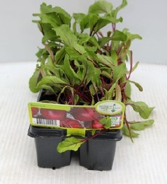 Beetroot in 6 Pack Tray