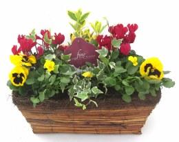 Wicker Window Box Planted with Seasonal Colour