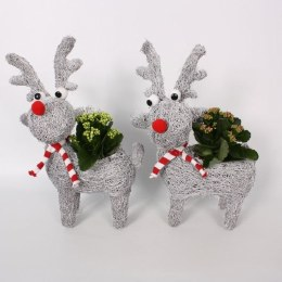 Potted X-mas 'Reindeer' with Kalanchoe