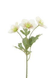 Christmas Iced Hellebore Spray 38cm