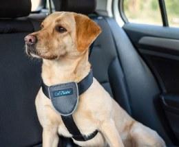 CarSafe Dog Travel Harness
