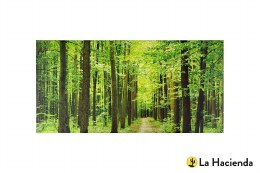 La Hacienda Garden Canvas Forest Path  59x119cm