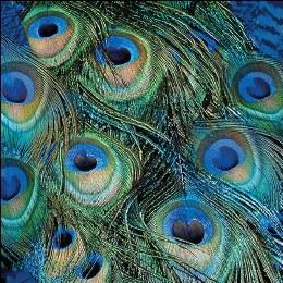 Napkin 33cm Peacock