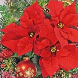 Napkin 33cm Red Poinsettia