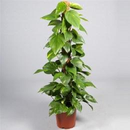 HabiStat Live Plants Mosstok Pole