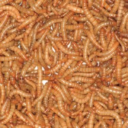 Mealworms 500g Bag