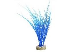 Aqua-dreamscapes Acorus Blue Ocean 26cm