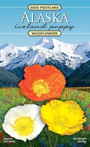 Iceland Poppy Seed Packet