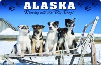Sled Dogs Alaska Placemat