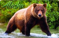 Brown Bear Alaska Placemat