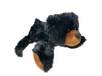 Small Black Bear