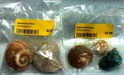 Hermit Crab Shells Asst Sizes